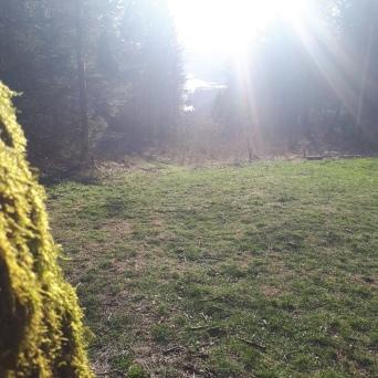 Sonnenstrahlen am Lärchenplatz